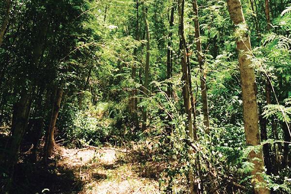 造林護林與森林遊俠