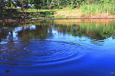 環保生態池
