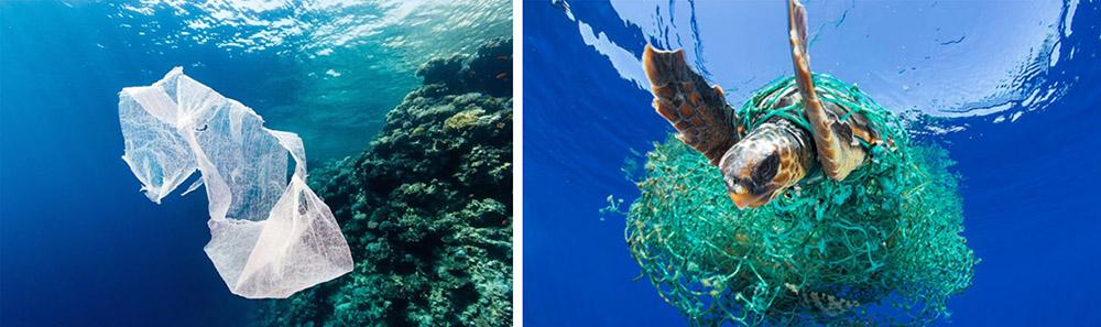 海洋生物塑胶为害
