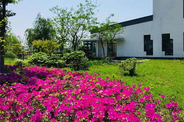 綠楊城郭美如畫 揚州廠哪裡最美?