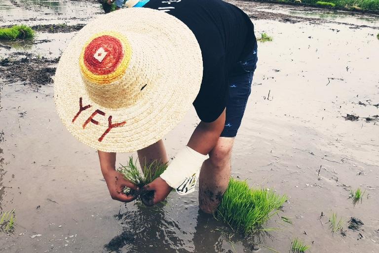 萬畝良田親子田間農事體驗  推進綠色農業夢想